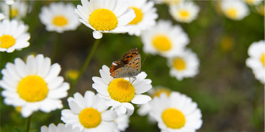 季節の草花観察