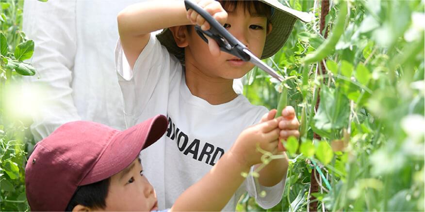 丹波篠山の野菜収穫体験